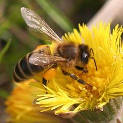 Monitoring prezimovania včelstiev na Slovensku 2019/2020